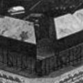 bottone Genova